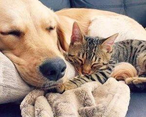 cat dog sleeping pals